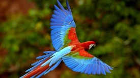 Bird With Sky Wings HD Wallpaper