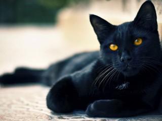 Black Cat Hd 1080p Wallpapers Download
