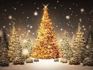 Christmas tree lightining Wallpaper