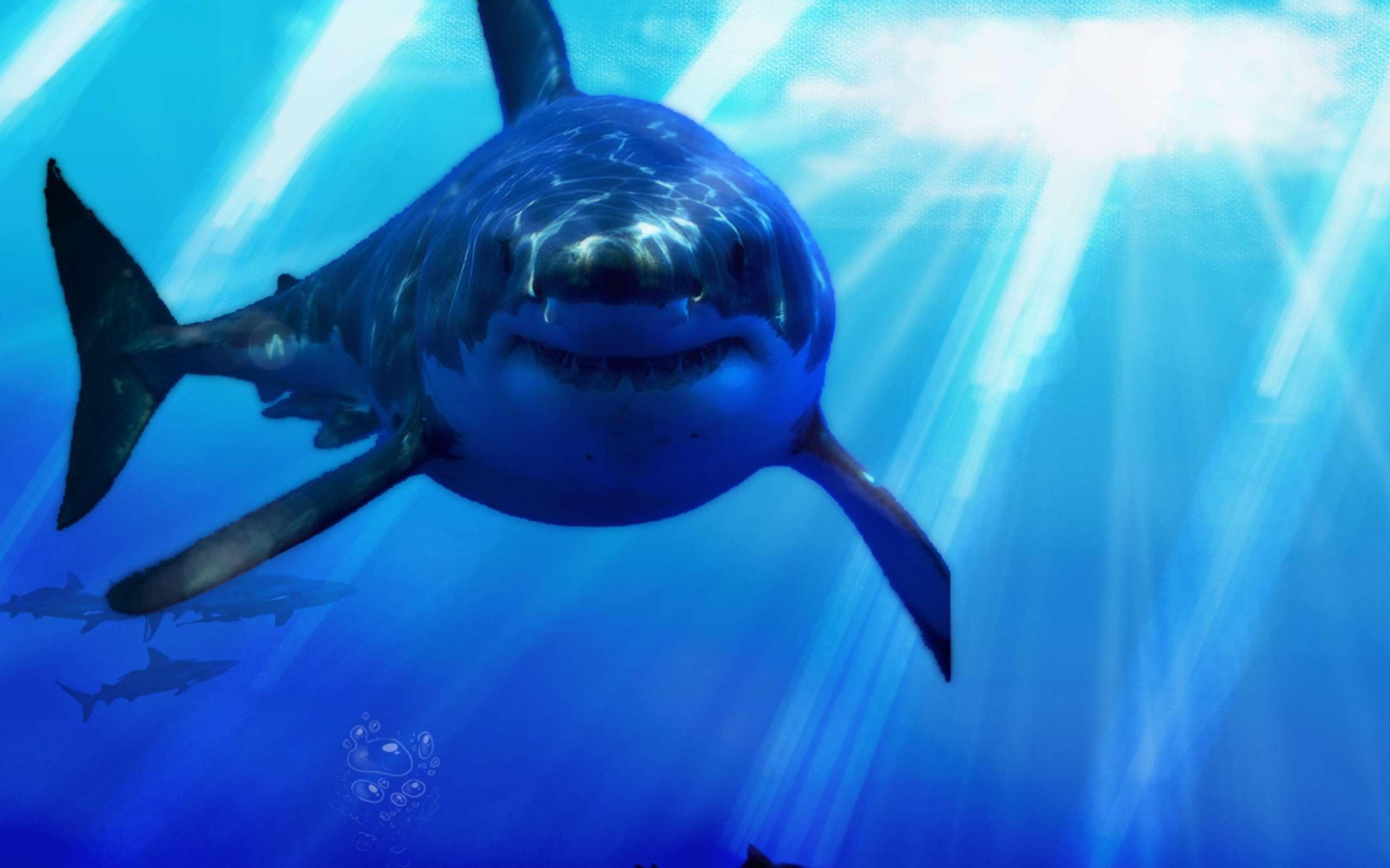 Заставка С Акулами