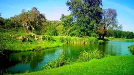HD Green Nature Wallpapers