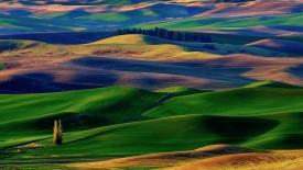 Nature Beauty HD grass grounds