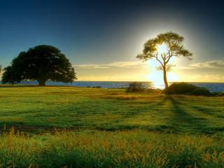 sun set grass land hd wallpaper