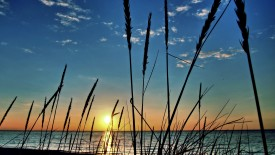 Grass At The Beach At Sunset Hd Widescreen Wallpapers HD Pic