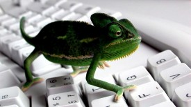 Keyboard Lizard 3D Wallpaper Widescreen