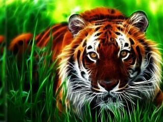 Tiger 3D Wallpaper