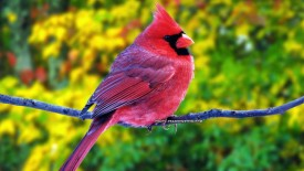 Beautiful Pink Bird