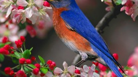Beautiful Wallpapers For Desktop Birds