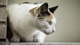 Cats Animals Kitten Hd Widescreen Desktop Wallpaper