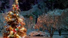 Christmas Tree Lights HD Wallpaper