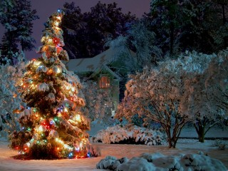 Christmas Tree Lights HD Wallpaper