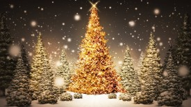 Christmas tree lightining Wallpaper