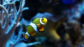 Exotic Fish Wallpaper