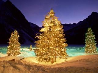 Free Christmas Tree HD Wallpapers