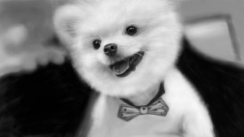 Funny Dog Hd 1080p Wallpapers Download