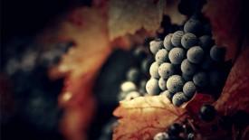 Grapes Widescreen Wallpaper