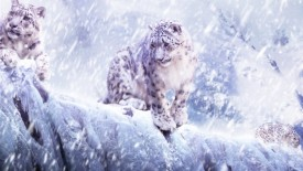 Leopards In The Snow Mac Wallpaper