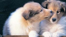 Nice Puppies Wallpaper Hd Widescreen