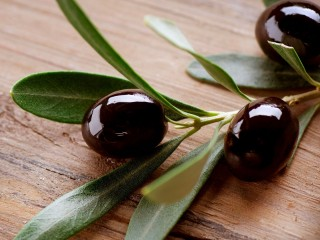 Olive Hd Widescreen Wallpapers