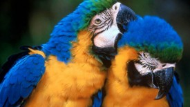 Parrot Beautiful HD Birds