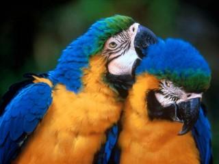 Parrot Beautiful HD Birds