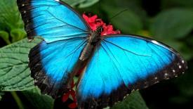 Picture Butterfly Hd Wallpapers