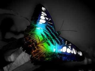 colorful butterfly beauty of nature