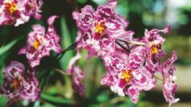 Jungle Orchids Flower HD Widescreen Wallpapers