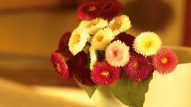 Mix Flower HD Widescreen Wallpapers