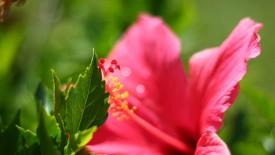 Pink Flower in the Garden HD Widescreen Wallpapers