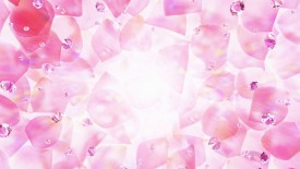 Pink Rose Petals 1080p Flowers HD Wallpaper