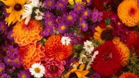 Spring Flower Medley