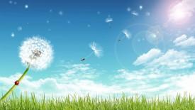 Art Design Romantic Dandelion Under Blue Sky