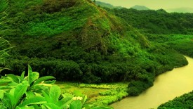 Beautiful Green Nature Sceanery High Definition Wallpapers