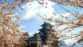 Castles Japanese Spring Flowers