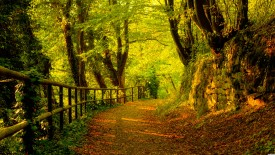 Clear Green Forrest Detailed Wallpapers