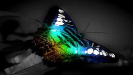 Colorful Butterfly 3D HD Wallpaper