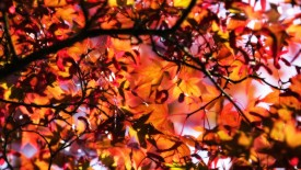 Cool Autumn Backgrounds