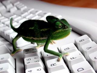 Keyboard Lizard 3D Wallpaper Widescreen