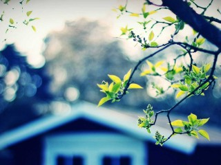 Tree And House  1080p Wallpapers Download