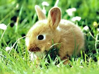 Bunny Animal HD Wallpaper